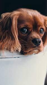 Cute Animal Phone Wallpapers ...