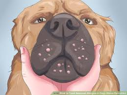 How to Treat Seasonal Allergies in Dogs (Home Remedies): 7 Steps