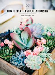 from wall installations to single potted plants succulents have been the hottest plant around recently so we decided it was high time for a guide to