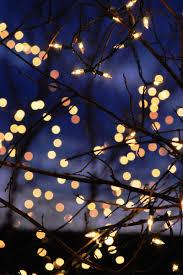 kvknowsherfun:ral-across-the-universe:Winter LightsI need more twinkle  lights