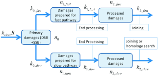 Process Flow Chart For The Two Pathway Model Primary