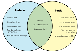 Diffusion And Osmosis Venn Diagram Difference Between Tortoise And Turtle Whyunlike Com