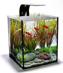 full size of square clear glass small fish tank with wrought iron borders and hooks aquarium office