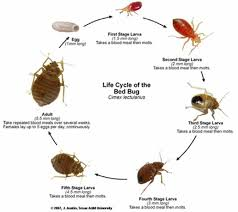 50 best Bed Bugs images on Pinterest