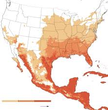 Mosquito Chart How Dengue A Deadly Mosquito Borne Disease Could Spread In