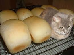 Cat In Bread Box Impressive Bread Thread