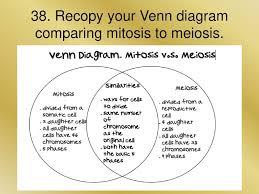 Venn Diagram Meiosis And Mitosis Mitosis Meiosis Unit 7 Ppt Download