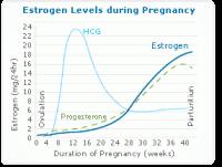 Estrogen Levels Chart Estrogen Chart During Pregnancy How Menopause Affects