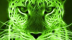 cool cat | Lime green wallpaper, Green ...