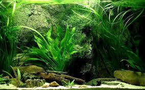 fish tank wallpapers. Exellent Tank Aquarium Wallpapers Group 65 Intended Fish Tank O