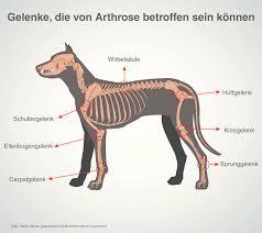 homöopathie für hunde symptome dosierung behandlung