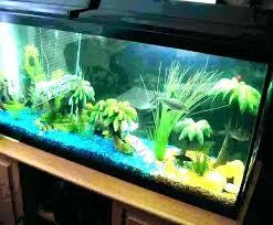 full size of fish tank as design designs home aquarium awesome decoration small big tanks ideas