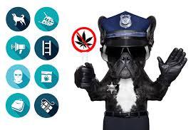"""Résultat de recherche d'images pour """"cannabis et chiens pisteurs"""""""
