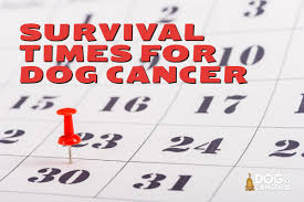 survival times and dog cancer dog