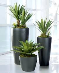 cheap office plants. full image for artificial plants office cheap floor 0