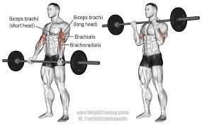 Image result for bicep curl