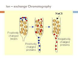 Ppt Ion Exchange Chromatography Powerpoint Presentation