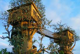 cool tree house blueprints. Tree Home Design Ideas Cool House Blueprints D