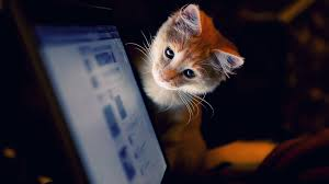wallpapers cute cats 82