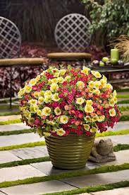 bright yellow combines with the hot tones of pink in a combination we call aloha planting flowersflower gardeningflowers
