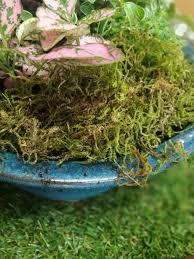 moss kids korner lifestyle home garden childrens activities johannesburg gauteng blog summer nursery plant outdoors