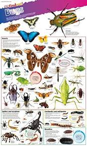 Dkfindout Bugs Poster