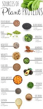 Sources Of Plant Protein In 2019 Healthy Eating Healthy