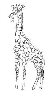 Baby Giraf Kleurplaat Ausmalbild Rothschild Giraffe Ausmalbilder