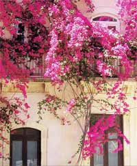 Social Climbers How To Cover A House In Plants  TelegraphWall Climbing Plants India