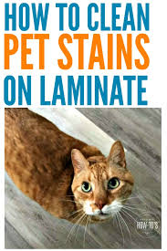 how to clean pet stains on laminate floors are mine the only pets that make