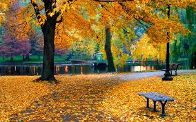 the public garden at boston