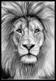 realistic lion face drawing. Plain Drawing Beautiful Sketch Of A Lion Inside Realistic Lion Face Drawing Pinterest