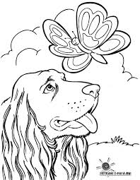 Berner Sennen Kleurplaat Berner Sennenhund Gratis Malvorlage In