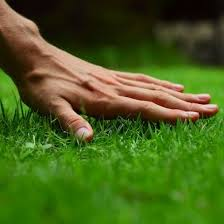 Image For Lawns Homemade Fertilizer For Lawns My Wishlist Lawn Care Tips