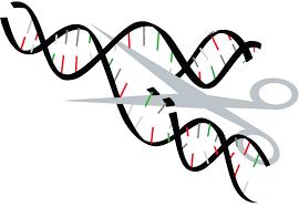 Genome Editing Bioedge Debate Begins Over Ethics Of Genetic Editing