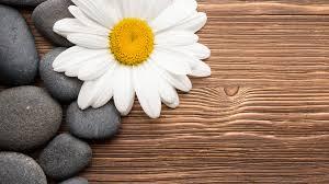 1920x1080 camomiles stones white flower