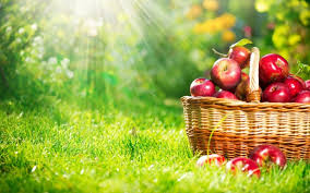 green and red apples in basket. basket with red apples green and in
