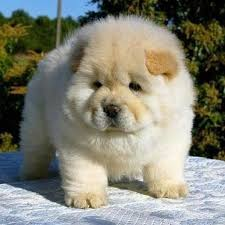 kittens and puppies and bunnies and hamsters and monkeys.  And Dog Cat Bunny Hamster Panda Monkey Bird Turtle Horse Puppy  Animals Nature Cute Love Catlover Doglover Pet Furry Kitten Adorable  For Kittens And Puppies Bunnies Hamsters Monkeys N