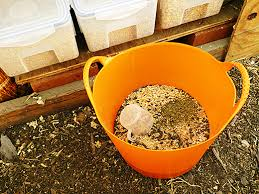 Homemade chicken feed-The ingredients to add in your Diy poultry ...