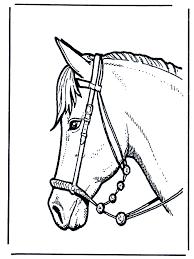 Paardenhoofd 2 Kleurplaten Paarden