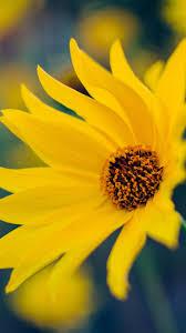 Yellow Flower Wallpaper - iPhone ...