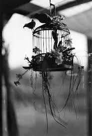 それは黒くて赤い鳥の籠 小説 恋愛 魔法のiらんど