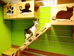 93 best cats images on diy cat enclosure and diy cat furniture instructions