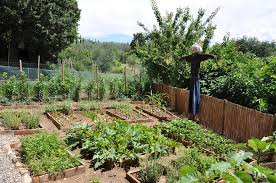 Small Picture Amazing of Fruit And Vegetable Garden 17 Best Ideas About Home