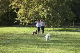 best off leash dog parks in area diy outdoor potty