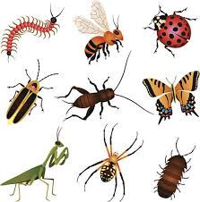 beneficial insects for plants
