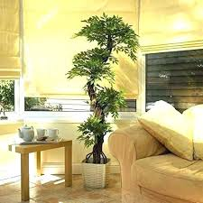live palm trees artificial real indoor trees large live tree palm cottages huts land terrestrial cambodia live palm trees