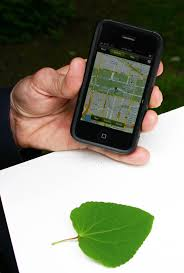 Leafsnap A New Mobile App That Identifies Plants By Leaf