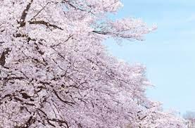 春 とい えば