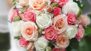 florist in rochester ny expressions flowers gifts